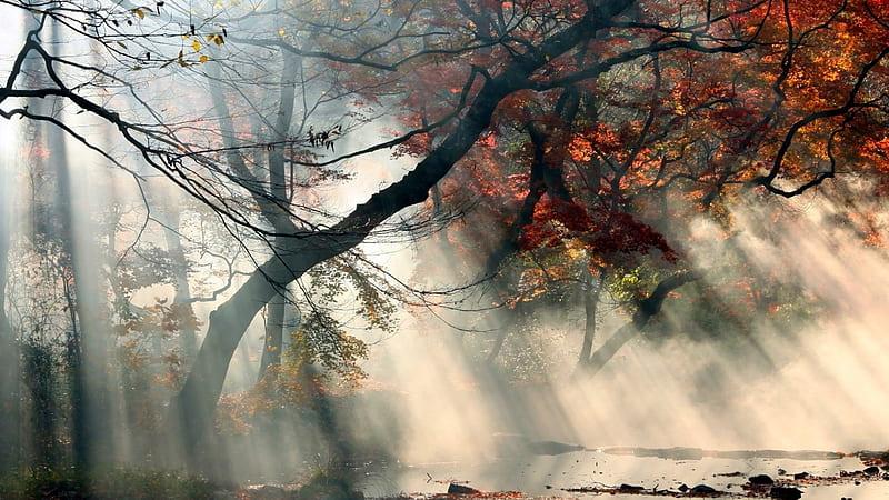 https://nightfallastrology.com/wp-content/uploads/2021/09/HD-wallpaper-mystical-foggy-forest-mystical-forest-autumn-river-fog.jpg